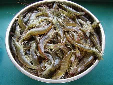 虾的清洗方法图解