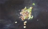 炒米饭(土豆控)的做法图片步骤11