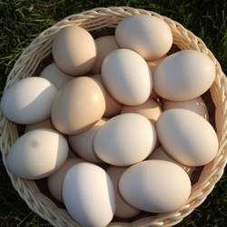 鸡蛋的功效与作用