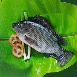 罗非鱼的功效与作用