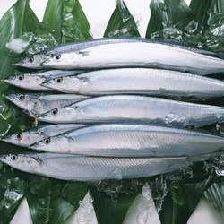秋刀鱼的功效与作用
