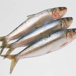 沙丁鱼的功效与作用