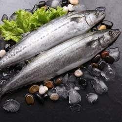 鲅鱼的功效与作用