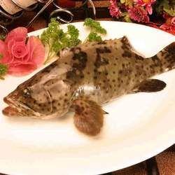 石斑鱼的功效与作用