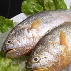 小黄鱼的功效与作用