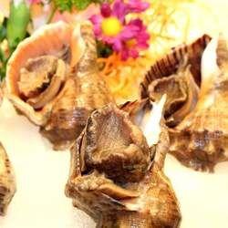 海螺的功效与作用