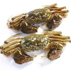 河蟹的功效与作用