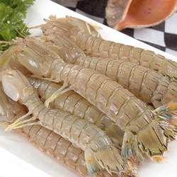 皮皮虾的功效与作用