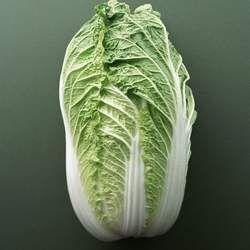 白菜的功效与作用