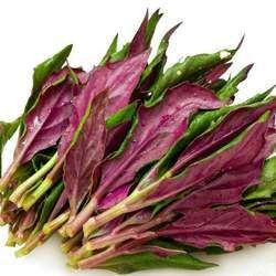 紫背天葵的功效与作用