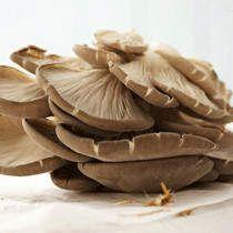 平菇的功效与作用