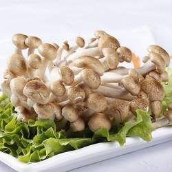 蟹味菇的功效与作用