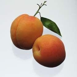 杏的功效与作用