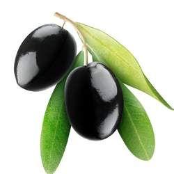 黑橄榄的功效与作用