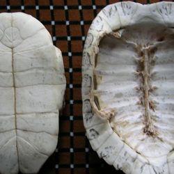龟板的功效与作用