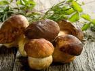 吃香菇有什么好处 温水泡发香菇预防感冒